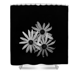 Black Eyed Susan's 1 Shower Curtain by Simone Ochrym