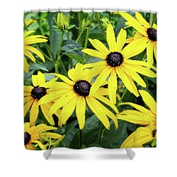 Black Eyed Susans- Fine Art Photograph By Linda Woods Shower Curtain