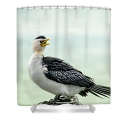 black faced Cormorant 02 Shower Curtain