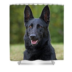 Black German Shepherd Dog Shower Curtain
