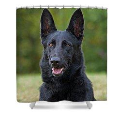 Black German Shepherd Dog Shower Curtain by Sandy Keeton