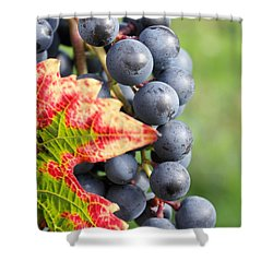 Black Grapes On The Vine Shower Curtain