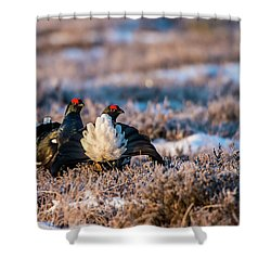 Black Grouses Shower Curtain by Torbjorn Swenelius