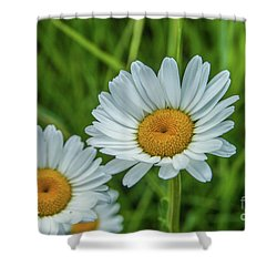 Black-headed Daisy's Shower Curtain