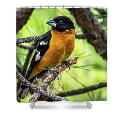 Black-headed Grosbeak Shower Curtain