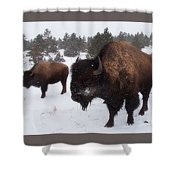 Black Hills Bison Shower Curtain