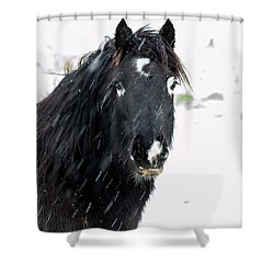 Black Horse Staring In The Snow Shower Curtain