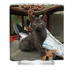 Black Kitten Shower Curtain