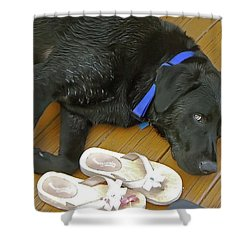 Black Lab Resting Shower Curtain by Brian Wallace