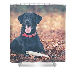 Black Labrador In The Fall Leaves Shower Curtain