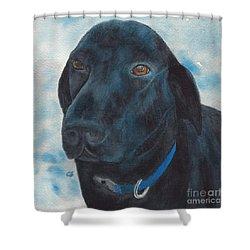 Black Labrador With Copper Eyes Portrait II Shower Curtain