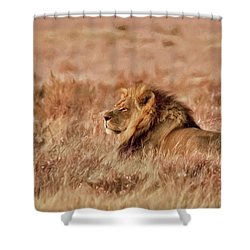 Black-maned Lion Of The Kalahari Waiting Shower Curtain