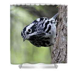 Black-n-white Warbler Shower Curtain