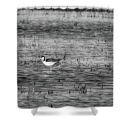 Black-necked Stilt Monochrome  Shower Curtain
