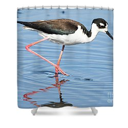 Shower Curtain featuring the photograph Black-necked Stilt Wading  by Ricky L Jones