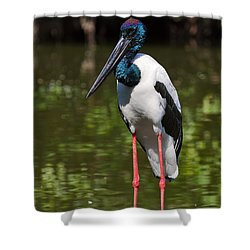 Black-necked Stork Shower Curtain by Louise Heusinkveld