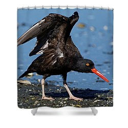 Black Oyster Catcher Shower Curtain