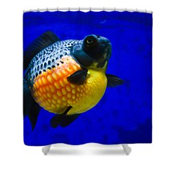Black Pearl Goldfish Shower Curtain