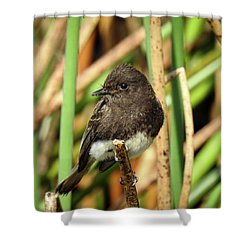 Black Phoebe Close Up Shower Curtain