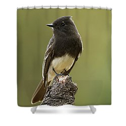 Black Phoebe Shower Curtain by Doug Herr