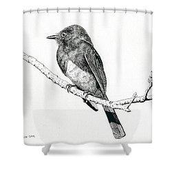 Black Phoebe Shower Curtain