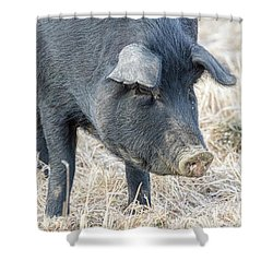 Shower Curtain featuring the photograph Black Pig Close-up by James BO Insogna