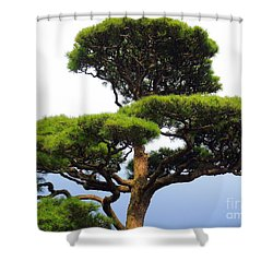 Black Pine Japan Shower Curtain