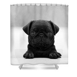 Black Pug Shower Curtain by Sumit Mehndiratta
