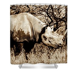 Black Rhino And Youngster Shower Curtain