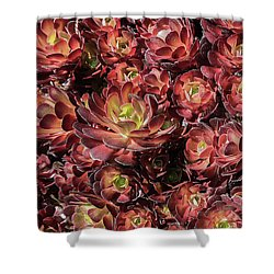 Black Roses Shower Curtain