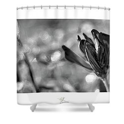 Black Silla Shower Curtain