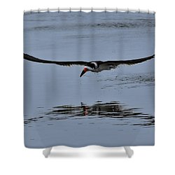 Black Skimmer Shower Curtain