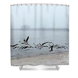 Black Skimmers - Biloxi Mississippi Shower Curtain
