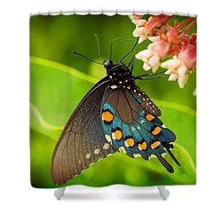 Black Swallowtail #1 Shower Curtain