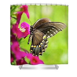 Shower Curtain featuring the photograph Black Swallowtail Butterfly by Christina Rollo