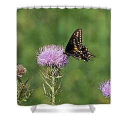 Shower Curtain featuring the photograph Black Swallowtail Butterfly by Sandy Keeton