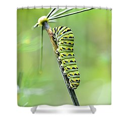 Black Swallowtail Caterpillar Shower Curtain by Debbie Green
