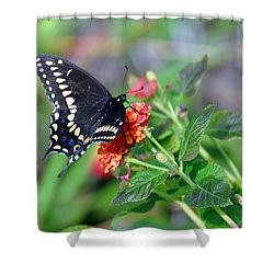 Black Swallowtail Shower Curtain by Kay Lovingood