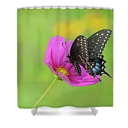 Black Swallowtail On A Cosmos Shower Curtain