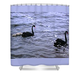 Black Swan Family Shower Curtain by Cassandra Buckley