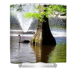Black Swan Shower Curtain
