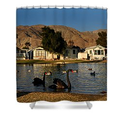 Black Swans In Sky Valley Shower Curtain by Diane Lent