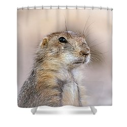 Black Tail Prairie Dog Shower Curtain by Elaine Malott