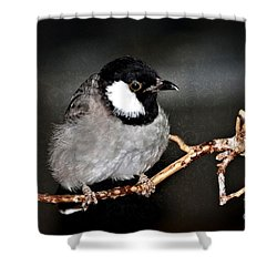 Black Throated Laughing  Thrush Shower Curtain by Elaine Manley