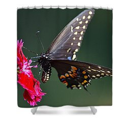 Black Tiger Swallowtail Shower Curtain