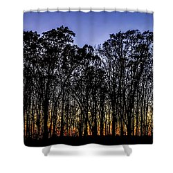 Shower Curtain featuring the photograph Black Trees by Onyonet  Photo Studios