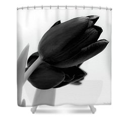 Black Tulips Shower Curtain