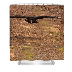 Black Vulture In Flight Shower Curtain by Chris Flees