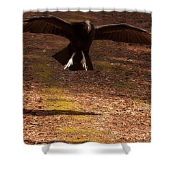 Black Vulture Landing Shower Curtain by Chris Flees
