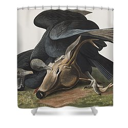 Black Vulture Or Carrion Crow Shower Curtain